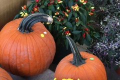 pumpkins-peppers