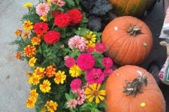 pumpkins-zinnias